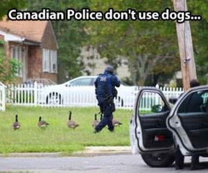 Canadian Police funny picture