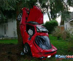 Car Tree Crash