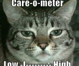 Cats Care o Meter