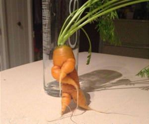carrot about to drop the album funny picture