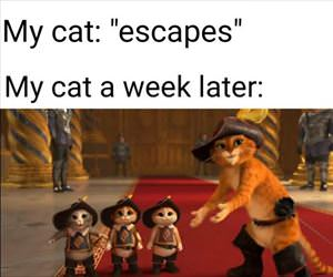 cat escapes