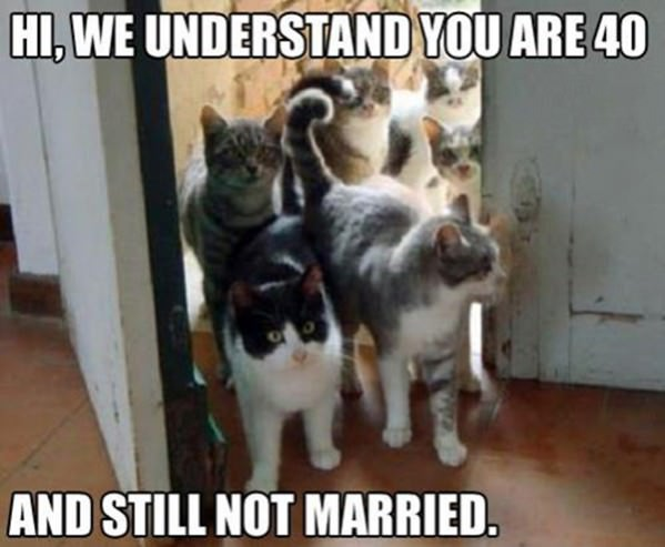Cat Family funny picture