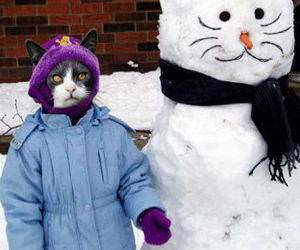 SnowMan and Cat picture