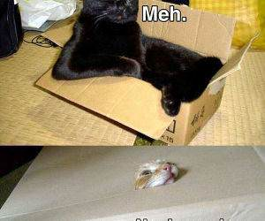 cat boxes funny picture