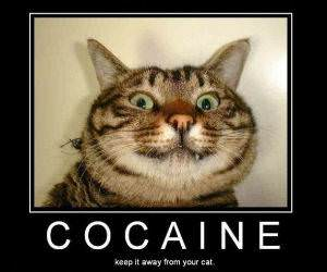 Cocaine for Cats Pic