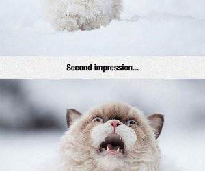 cat dealing with the snow funny picture