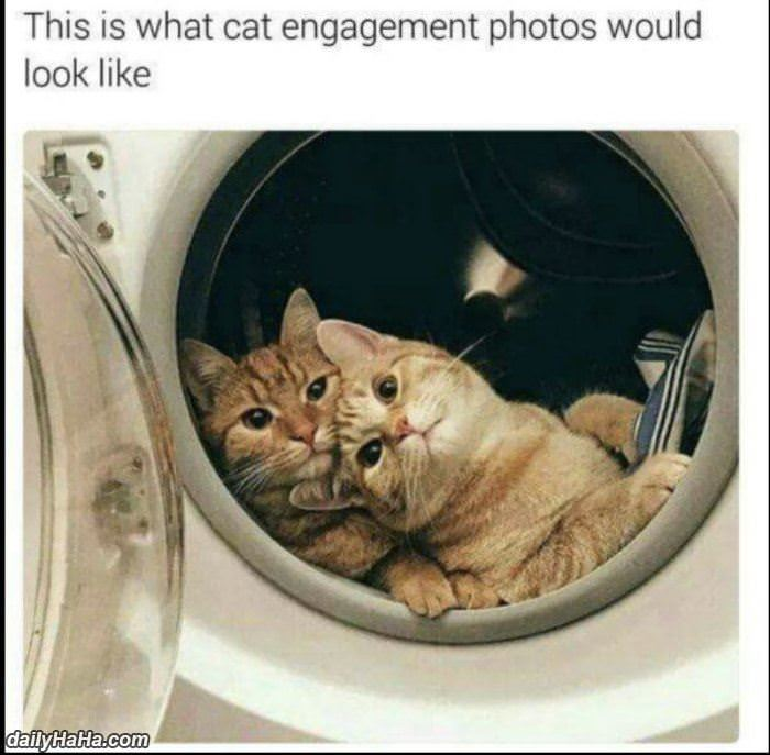 cat engagement photos funny picture