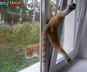 Cat exit strategy