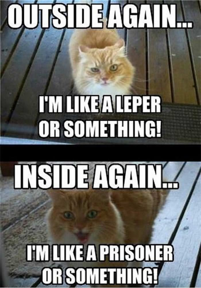 cat has 2 moods funny picture