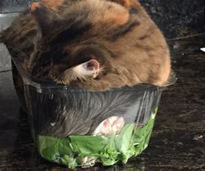 cat in my salad funny picture