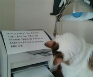 cat is obsessed with the printer funny picture