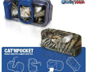 Cat in pocket