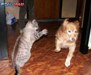 Cat Owns Dog funny picture