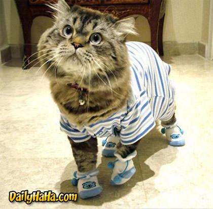 http://www.dailyhaha.com/_pics/cat_pajamas.jpg