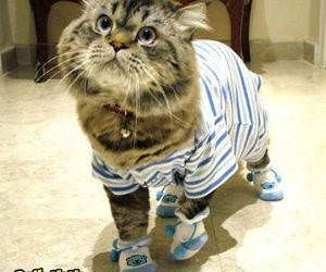 Kitty Wearing Clothes