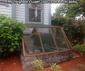 cat patio funny picture