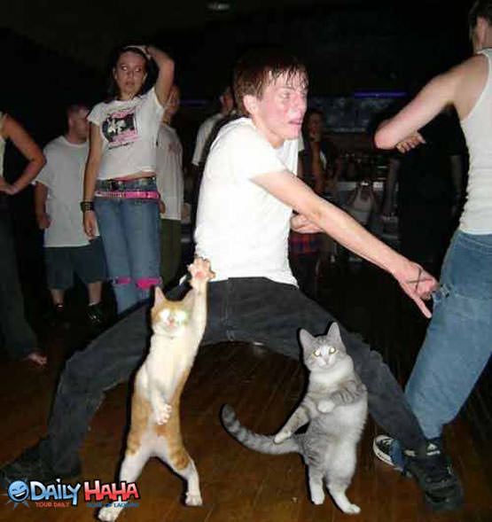 http://www.dailyhaha.com/_pics/cat_ravers.jpg