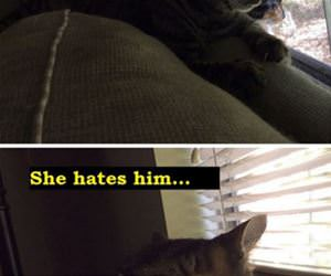 cat relationship funny picture