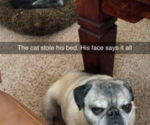 cat stole my bed face funny picture