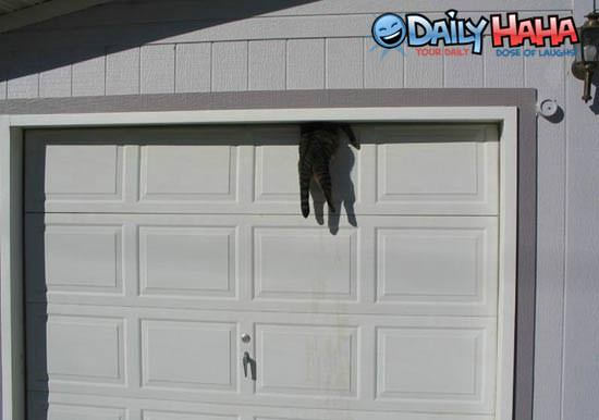 Pet door for garage door a doggie door installed in a for Dog door for garage door