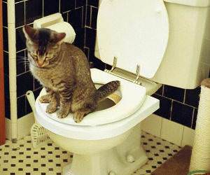 Cat Using the Toilet