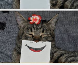 cat with drawn expressions funny picture