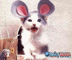 Cat with Mouse Ears