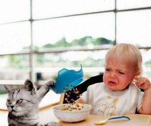 Cat Food funny picture