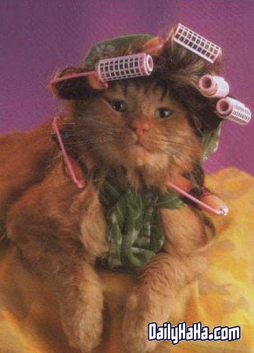 Cat with Rollers