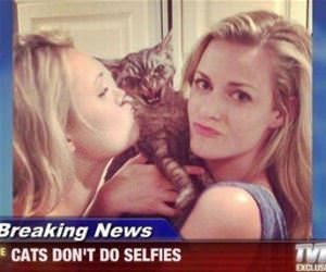 cats dont do selfies funny picture