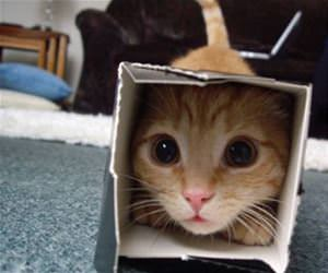 cats in boxes funny picture