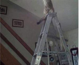 cats in weird places funny picture