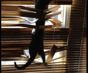 cats loving the blinds funny picture