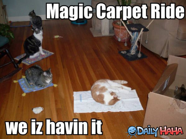 cats_magic_carpet_ride.jpg