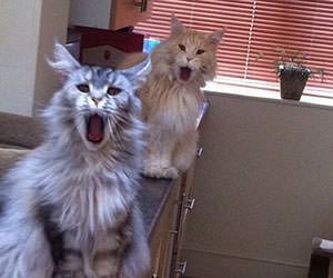 cats reaction funny picture