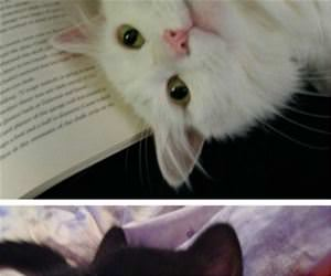 cats reading books funny picture