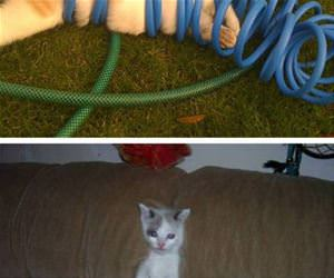 cats stuck in things funny picture