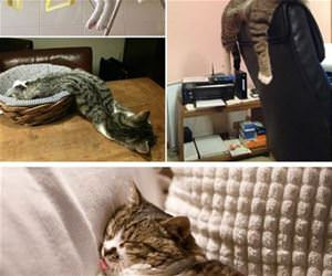 cats that are too tired to care funny picture