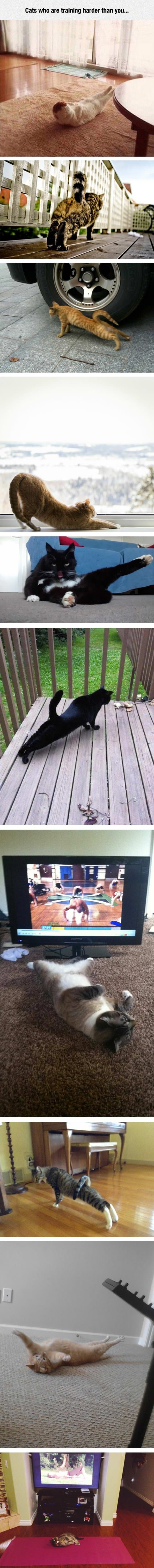 cats that are training hard funny picture