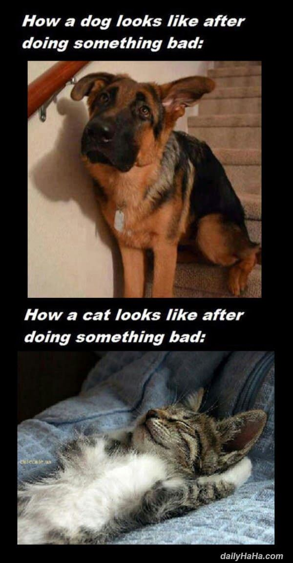 Day In The Life Of A Dog Versus Cat