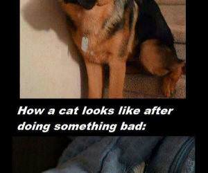 cats vs dogs funny picture