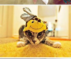 cats wearing hats funny picture