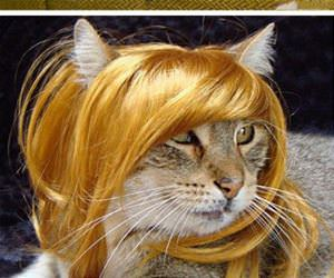 cats wearing wigs funny picture