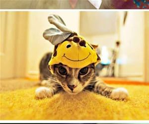 cats with hats funny picture