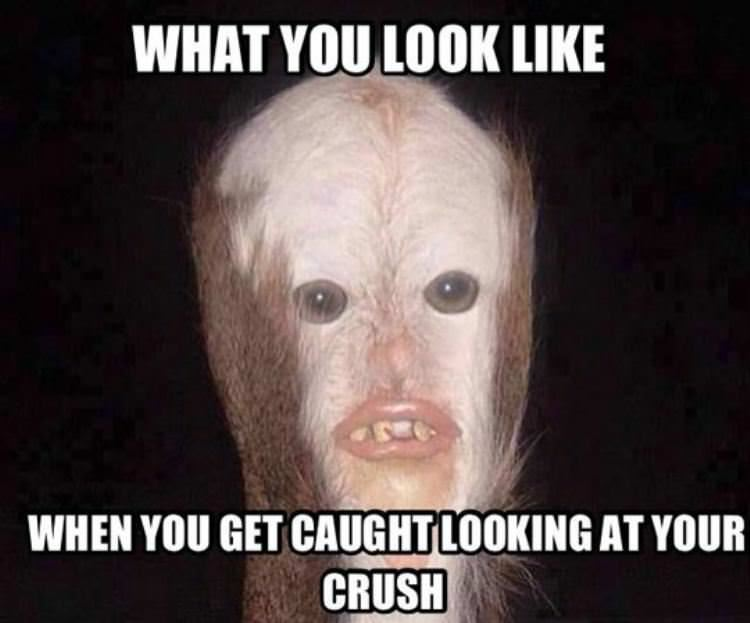 Funny Memes For Your Crush : Caught looking.jpg