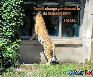 Change Your Channel funny picture