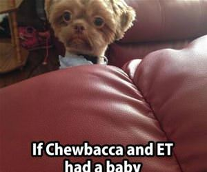 chewbacca and et funny picture
