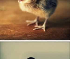 chicks wearing hats funny picture