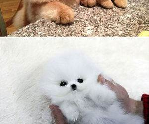 chubby puppies funny picture