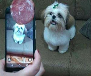 clever way to get the dog to look funny picture